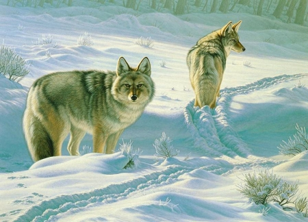 In the Snow - winter, snow, painting, white, wolves, animals