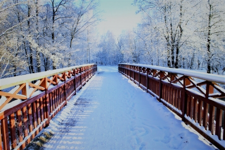 bridge in winter - trees, snow, bridge, winter