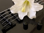 flower on bass guitar