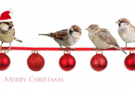 :) - bird, craciun, christmas, trio, pasari, sparrow, card, red, hat, santa