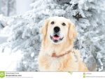 Winter Retriever