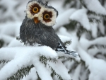 Cute winter Owl