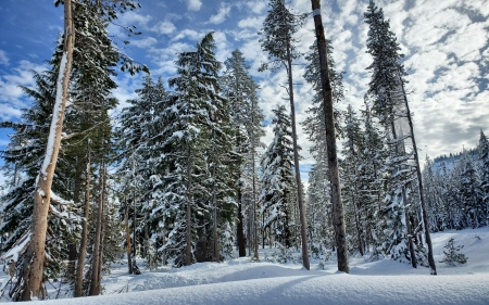Crater Lake National Park, Oregon - trees, snow, usa, forest, clouds, sky