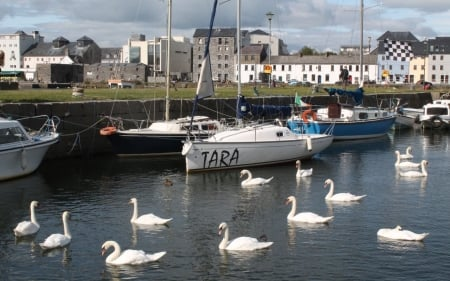 Galway Harbor, Ireland - yachts, Ireland, swans, harbor, houses