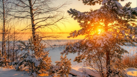 Russian winter - snow, ice, sunset, sunrise, russian, frost, winter, sun, beautiful, trees