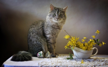 Cat and Flowers - yellow, table, flowers, cat, animal