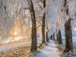 Winter Birch Avenue
