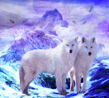 Two white Wolves - painting, white, wolves, animals