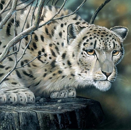 Snow Leopard - painting, leopard, cat, animal