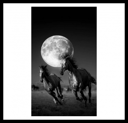 Night Time .... A Time To Run. - Night Sky, Grasslands, Horses, Moon, Black and White