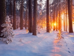 Snowy forest at sunrise