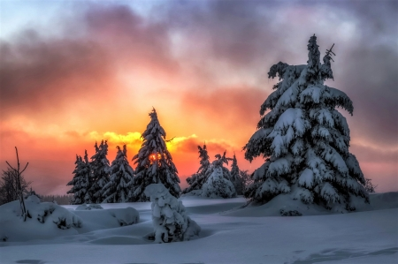 sunset behind the pines - sunset, sky, snow, pines
