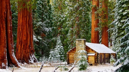 Maripose Grove National Park - Sequoia, winter, forest, snow, Yosemtite National Park, cabin, trees
