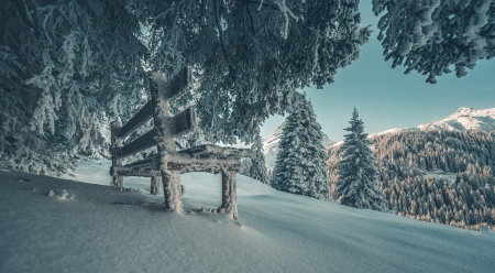 Winter park - Trees, Snow, Bench, Winter