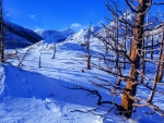 Winter wonderland in Waterton Lakes National Park, Alberta