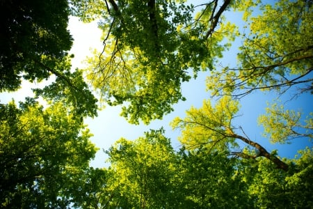 Lookin' up - perspective, green, forest, HD, nature, sky, blue