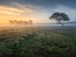 Early morning on 'the Badlands' of The Netherlands