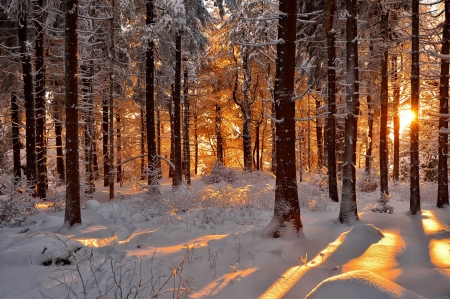 Winter morning - glow, fiery, rays, snow, beautiful, morning, trees, winter, frost