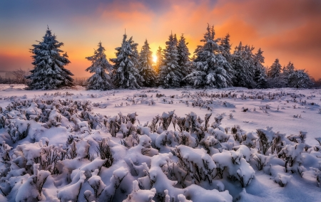 snowy landscape - sunset, snow, trees, field