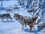 Wolves Group