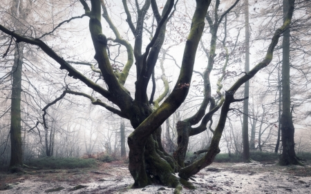 Tentacle - forest, trees, winter, mist, Germany