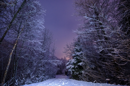 The evening - Snow, Forest, Road, Winter