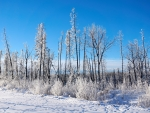 Hoarfrost on a cold winter morning, Fort McMurray, Alberta
