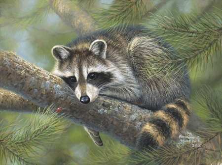 Raccoon nap - tree, sleep, painting, abraham hunter, pictura, raccoon, animal, art, nap, raton
