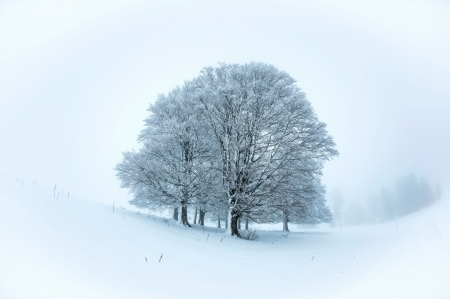 Vallee de Joux, Switzerland - ice, sky, snow, trees, cold