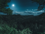 A thick hilly forest underneath a full moon and deep blue sky at night