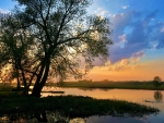 Evening at the Biebrza river, Poland