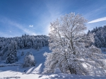 Sunny Winter Day in Black Forest