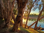 Just after dawn, Fitzroy River, northern Western Australia