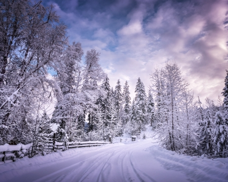 winter getaway - nature, snow, white, trees, winter