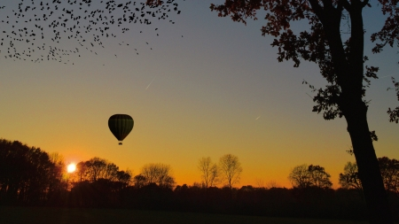 Air Balloon - nature, tree, silhouette, air balloon, sunset