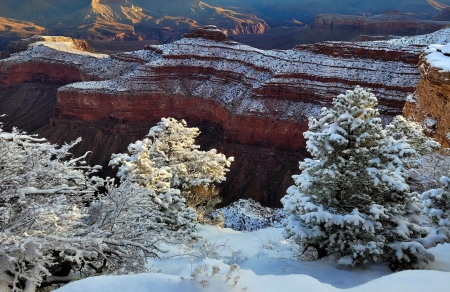 Grand Canyon after severe winter storms. Arizona - trees, snow, usa, mountains, landscape