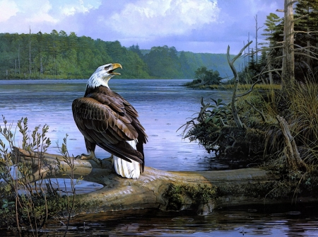 Eagles Cry - eagle, tree, water, bird, painting