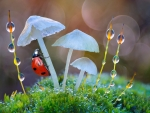 Ladybug and mushrooms