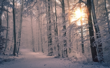 Winter Forest - winter, forest, sun, hoarfrost, path, sunbeams, mist