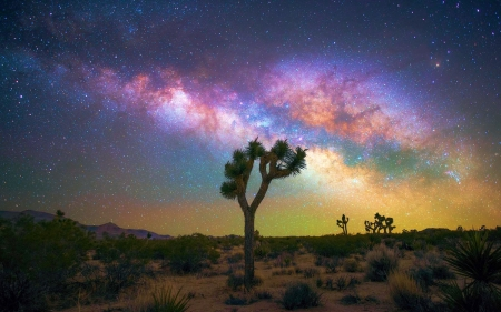 Milky Way over Joshua Tree NP - california, usa, colors, trees, clouds, landscape