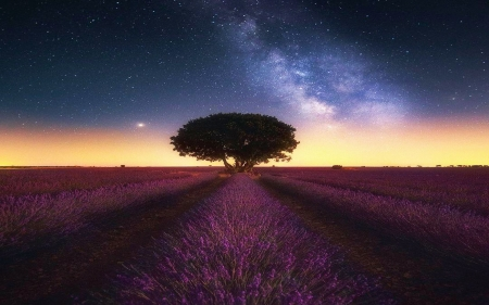 Milky Way over the beautiful lavender fields in Brihuega, Spain - stars, sunset, tree, sky, clouds