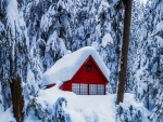 Snow-covered house in forest