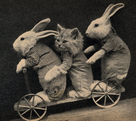 :) - trio, iepuras, bunny, cat, kitten, rabbit, animal, cute, retro, pisici, vintage