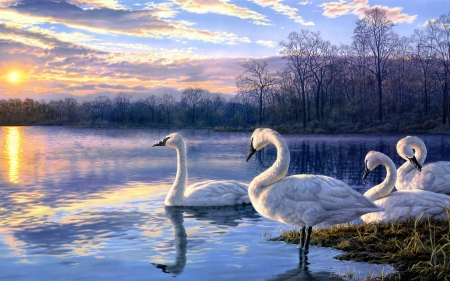 Swans - bird, water, pasari, lebada, swan, lake, blue