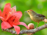 Bird and flower
