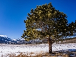 A Tree in a Field - Rocky Mountain National Park