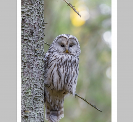 Lovable Owl - HD, birds, grey, nature, owls, animals, pretty, tree, photography, wise