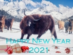 2021 ~ Chinese Zodiac - Ox