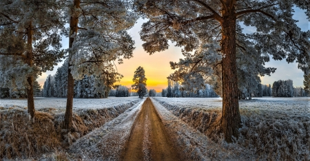 country road in winter - country road, sky, trees, winter