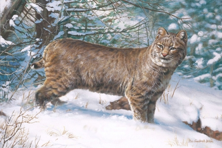 Bobcat in snow - cat, animal, winter, forest, painting, trees